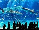World's 2nd Largest Aquarium