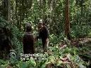 Survivorman - New Guinea